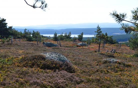 La lande et le lac Charpal au loin