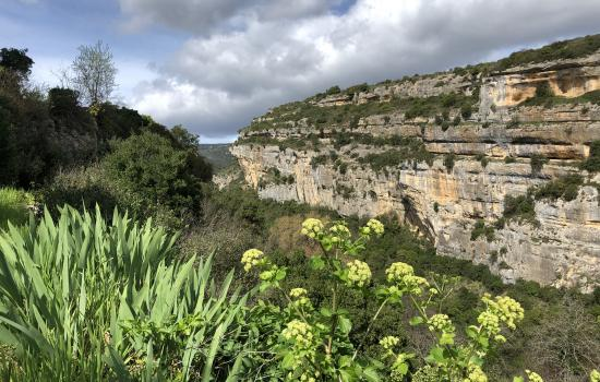 Les falaises au dessus de la Cesse à Minerve