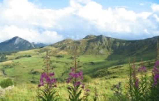 Volcanic landscape in Mezenc