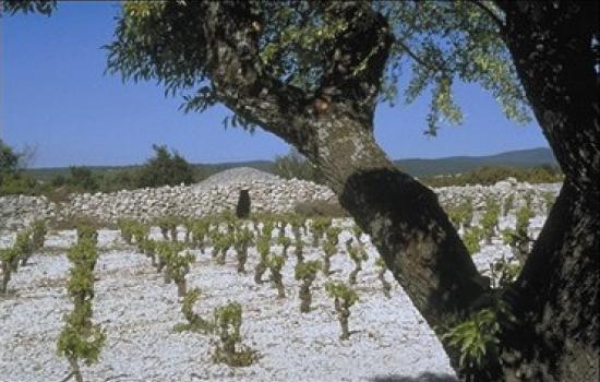 Vignobles du Minervois