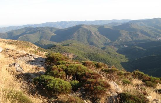 lumière de fin de journée sur les Monts d'Orb en Haut Languedoc