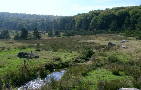 Zones humides de Margeride