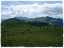 Les alpages des Monts du Cantal au coeur des volcans d'Auvergne
