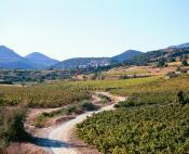 Paysages contrastés entre causses et vallée de l'Hérault