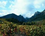 Vignobles et falaises escarpées du massif du Caroux