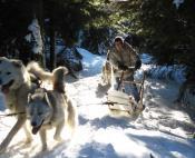 randonnee chiens de traineau massif central