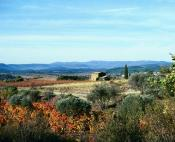 Olive trees and vineyards in Languedoc