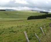 Prairies à perte de vue, c'est l'Aubrac