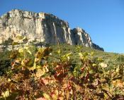 Cheminer entre vignes et garrigue