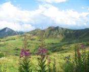 Paysage volcanique du Mézenc