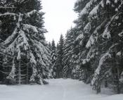 Forêt profonde enneigées secteur du Ché