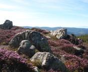 La bruyère des landes d'altitude en Haut Languedoc