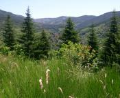 Forêt de l'Aigoual