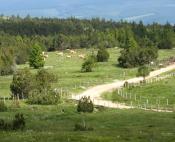 Paysage contrasté fait de landes, forêts de résineux et blocs granitiques